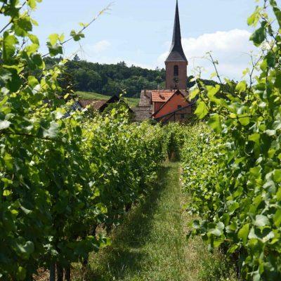 Vignes-dAlsace.1