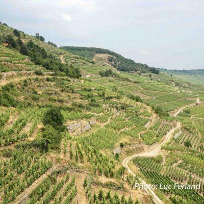 Vignes D'Alsace.2