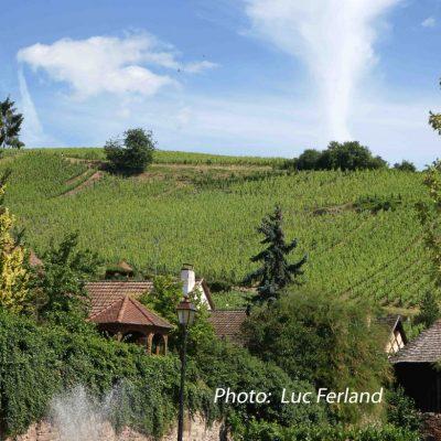 Vignes D'Alsace.
