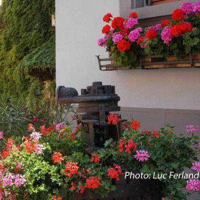 Village d'Alsace.6