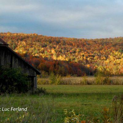 Charme d'automne, 4ème rg St-Gabrie.5l