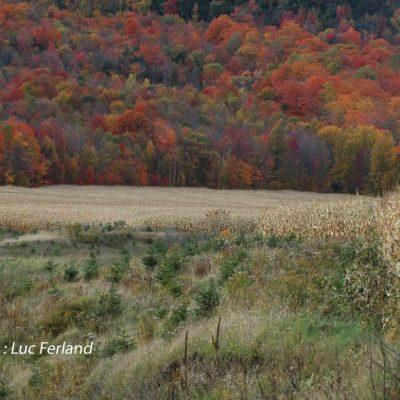 Charme d'automne, 4ème rg St-Gabriel.1