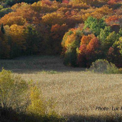 Charme d'automne, 4ème rg St-Gabriel.2