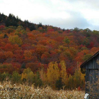 Charme d'automne, 4ème rg St-Gabriel.4