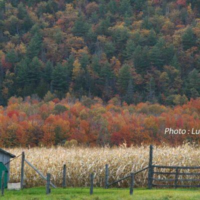 Charme d'automne, 4ème rg St-Gabriel.5