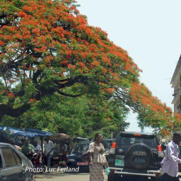 Guinée 1