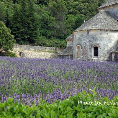 Abbaye Notre-Dame de Sénanque, Provence.2