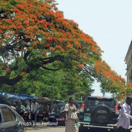 Guinée 1 – Conakry, la capitale