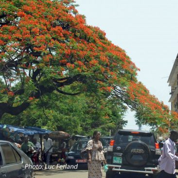 Guinée-1