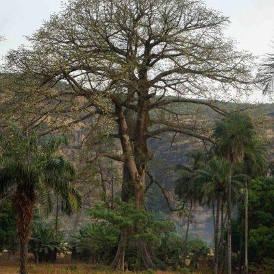 Guinée-23