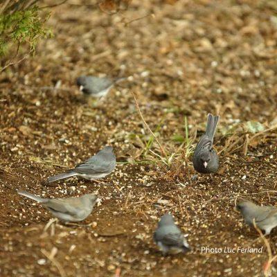 19. Regarder les oiseaux du ciel, ils ne sément, ni ne moisonnent, et pourtant...