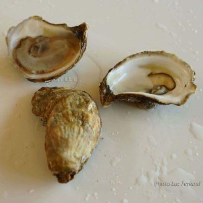 2. Si on s'était arrêté à l'apparence des huîtres on n'aurait jamais découvert les perles Boucar Diouf